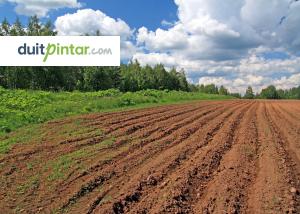 Hindari Penipuan Investasi Tanah dengan 3 Cara Ini